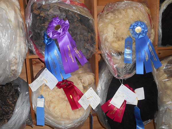 Competitions & Exhibitions – Columbia County Fair